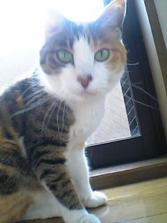 image/yokohama3-2006-06-17T20:29:23-1.jpg
