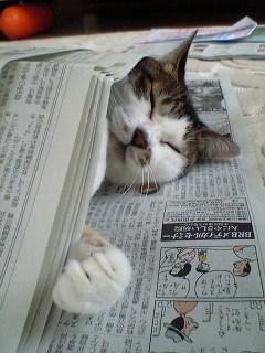 image/yokohama3-2006-06-18T14:11:36-1.JPG