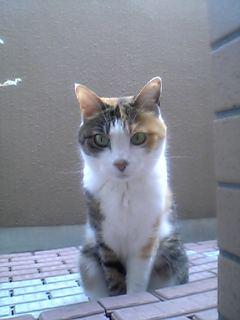 image/yokohama3-2006-06-29T12:09:56-1.jpg