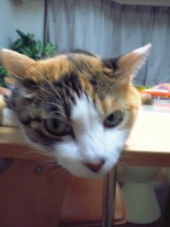 image/yokohama3-2006-07-04T21:31:27-1.JPG