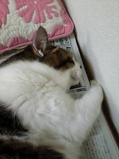 image/yokohama3-2006-07-13T23:45:14-1.jpg